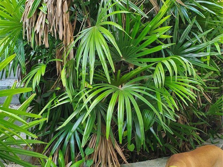 Rental 2111 Chamberlain St, Honolulu, HI, 96822. Photo 17 of 20